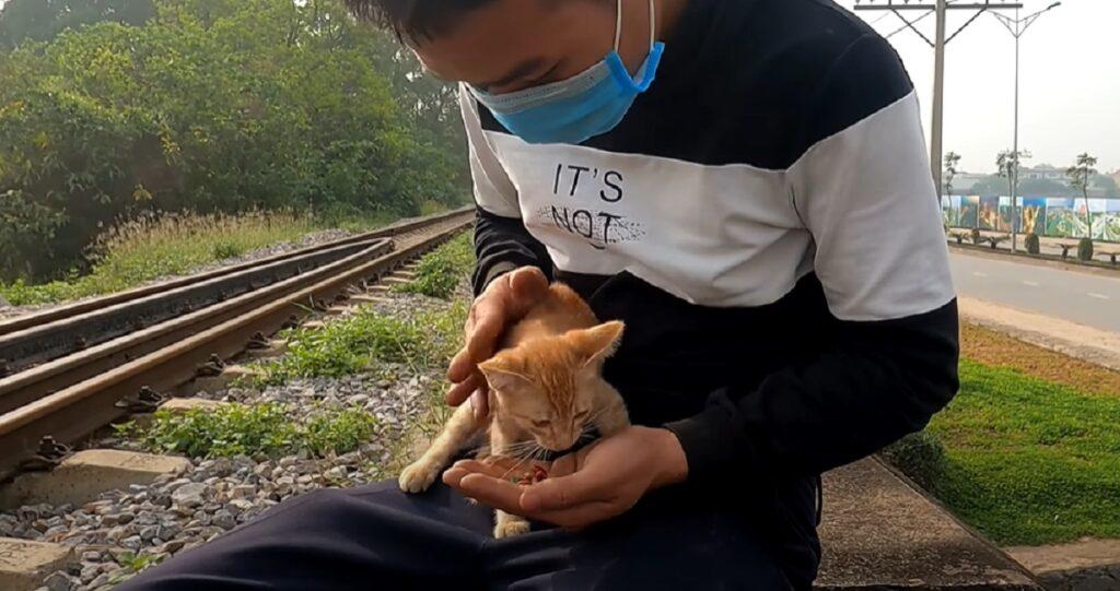 felino micetto salvo