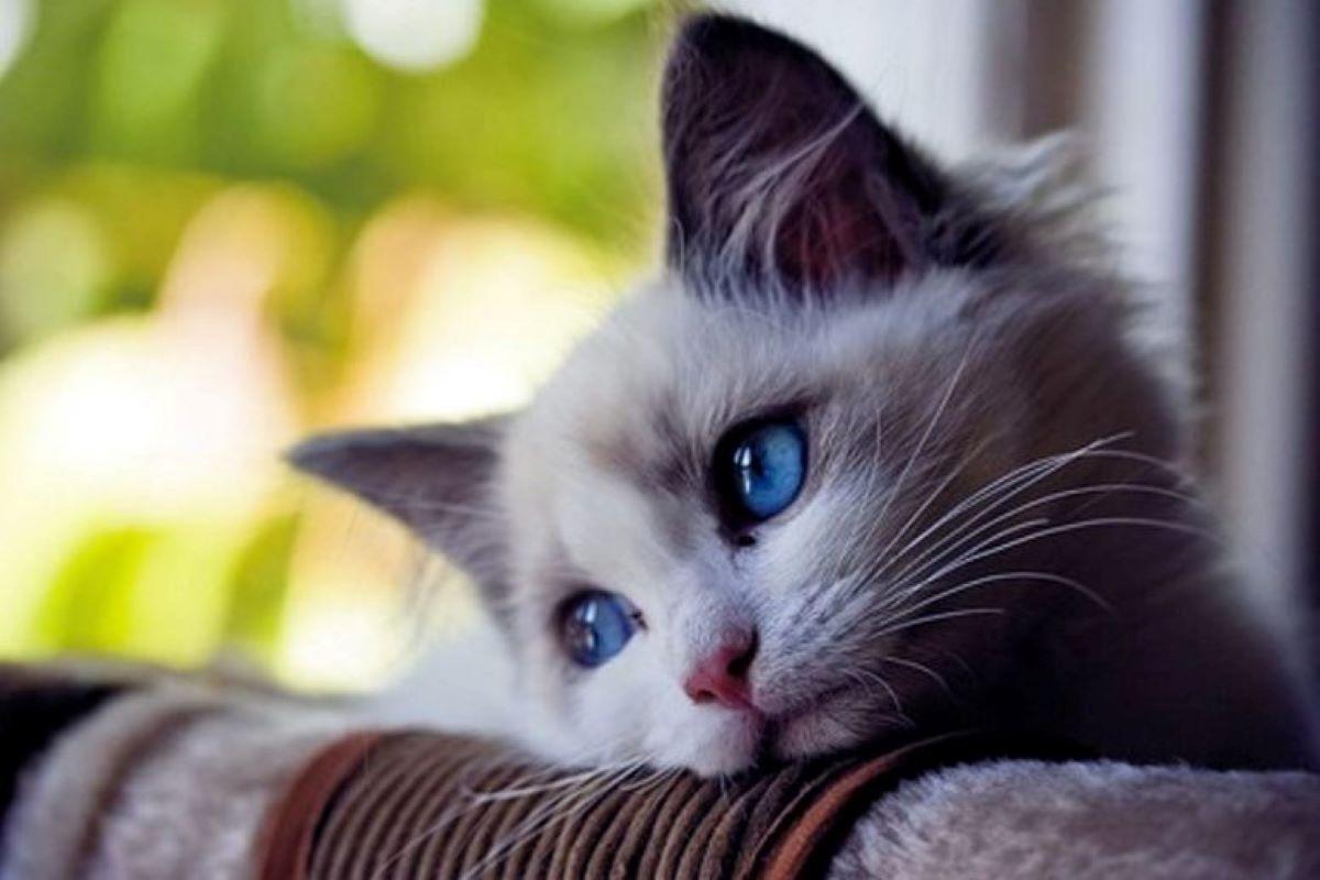 micio triste
