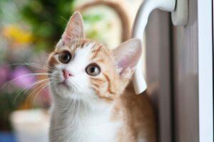 gattino scappa ogni volta che può