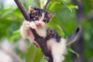 gattino sul ramo di un albero
