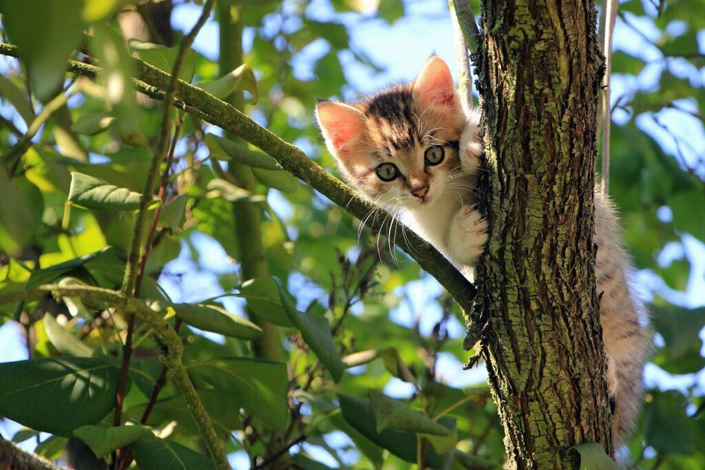 gattino bloccato su un albero