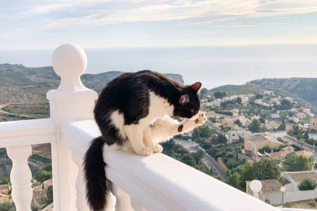 gatto nel balcone