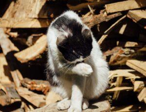 gattino si pulisce da solo