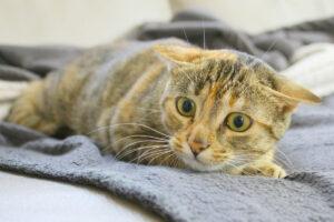 gattino trema se vede un oggetto