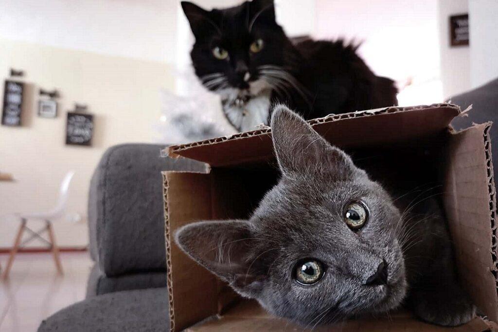 gattini con le scatole di cartone