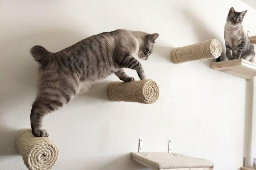 percorso a parete per gatti