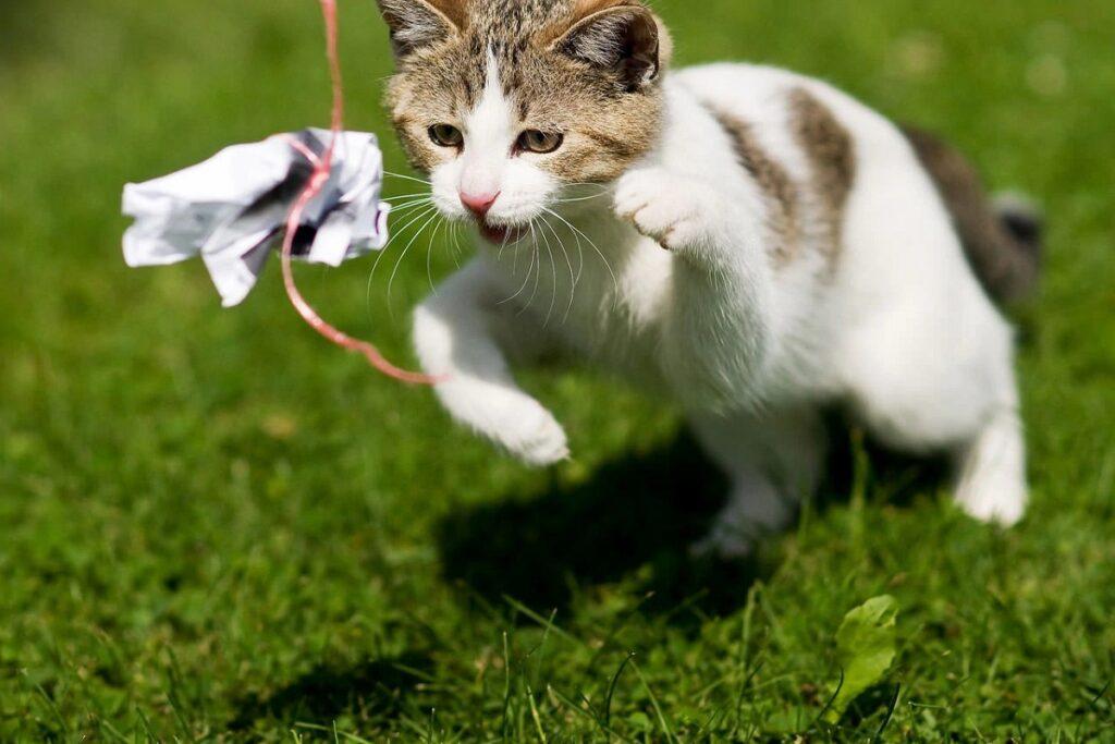 gatto rincorre pezzo di carta