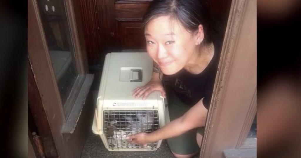 donna adotta gatto abbandonato