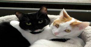 gatti abbracciati