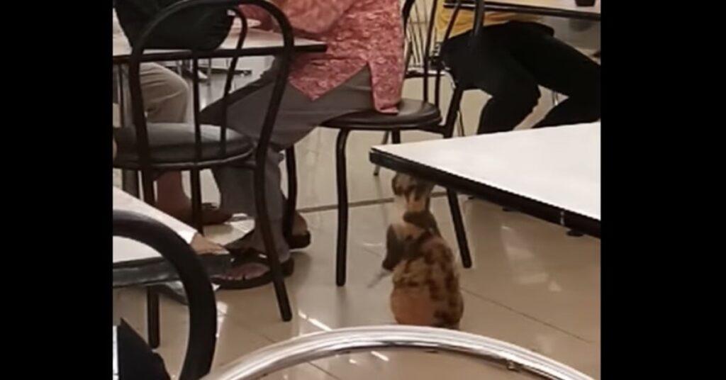 gatto chiede cibo a clienti Fast Food