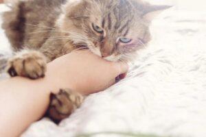 gatto morde mano
