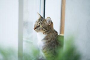gatto ama le piante