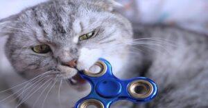 gatto grigio con fidget spinner in bocca