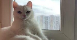 Gatto bianco sul davanzale