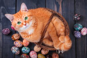 gatto nella cesta di pasqua