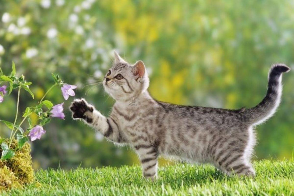 gattino impazzisce da solo