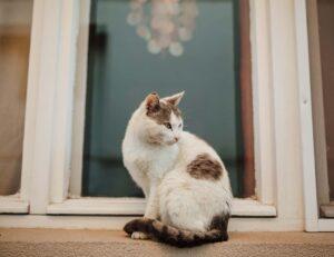 gatto sta fuori casa