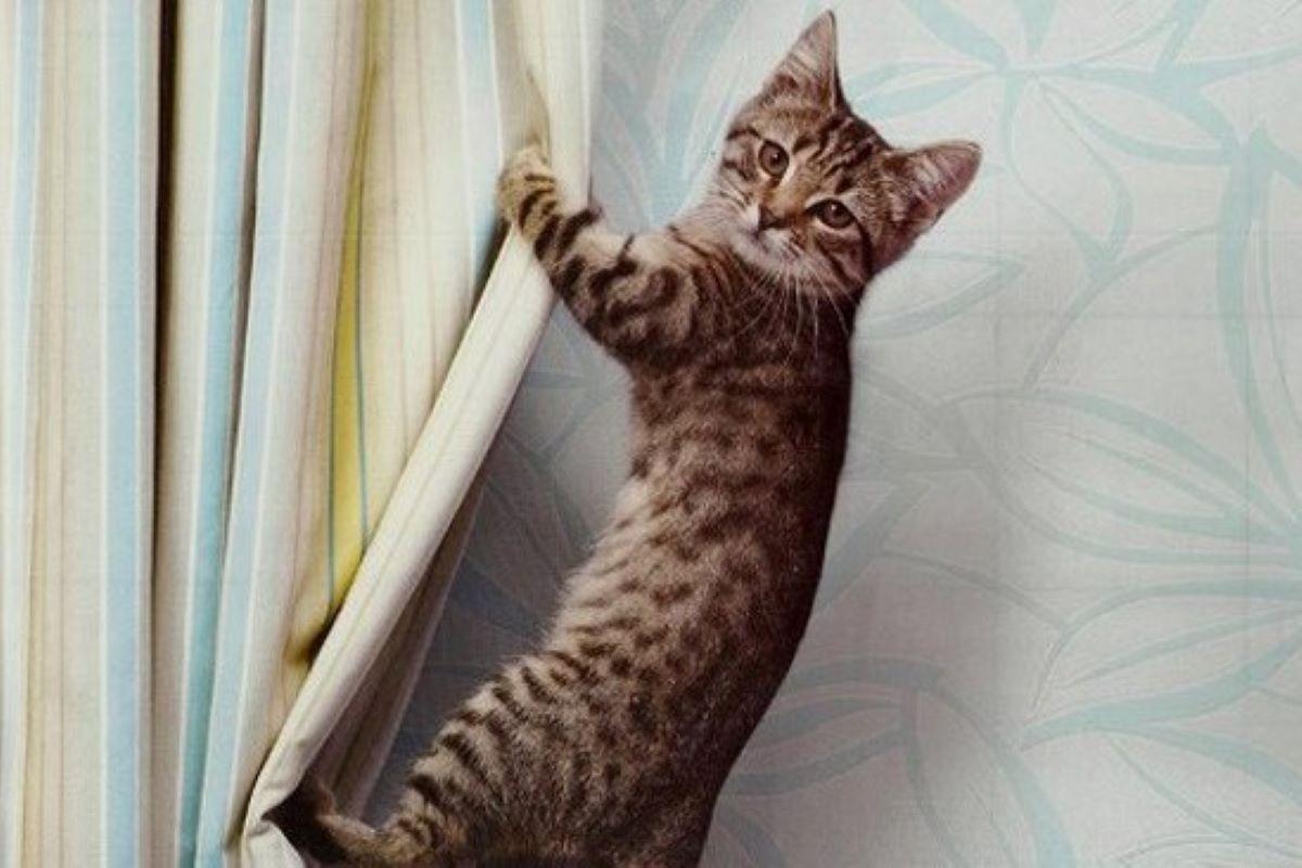 gattino si arrampica