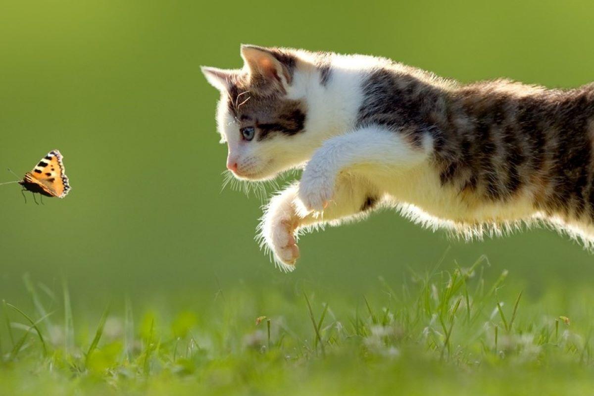 gattino caccia una farfalla