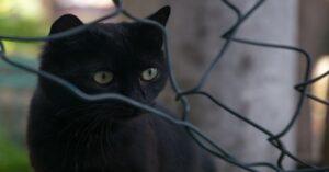 gatto nero dietro rete