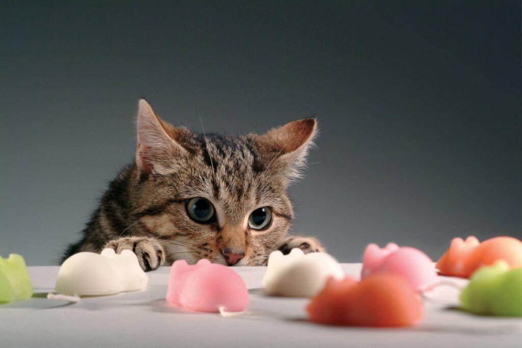gatto fissa topolini finti