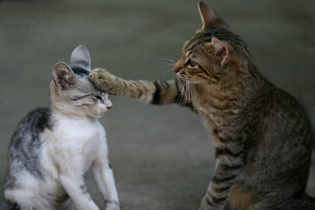 gatti non vanno d'accordo