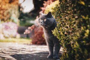 gatto in allerta