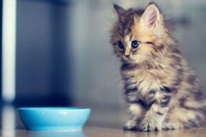gattino davanti alla ciotola