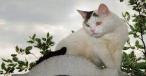 gatto bianco sopra una pietra