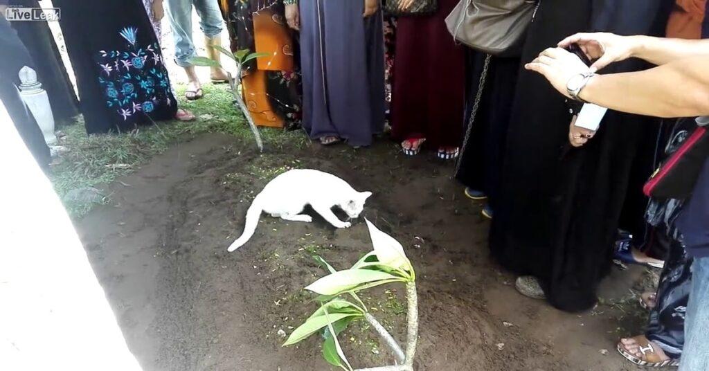 gatto sopra la tomba del morto