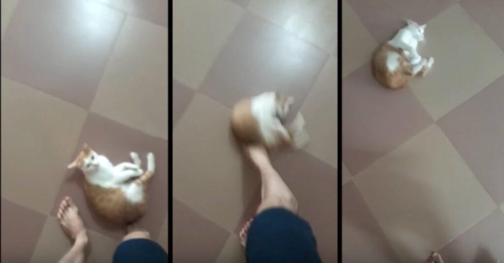 tre foto del gatto che pensa di essere una palla