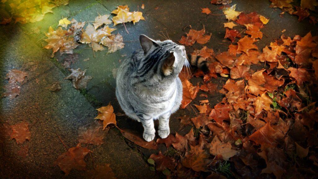 gattino e foglie