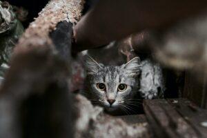 gatto nel cassonetto