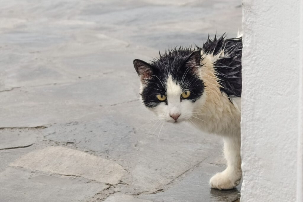 gatto sporco