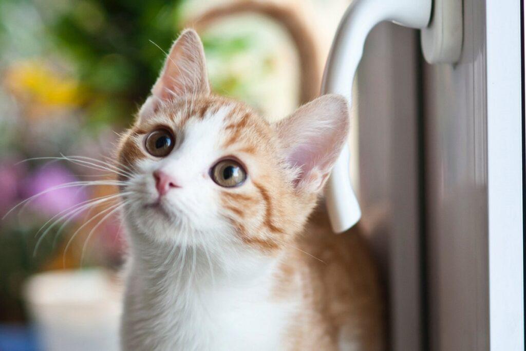 qualcosa attira gattino