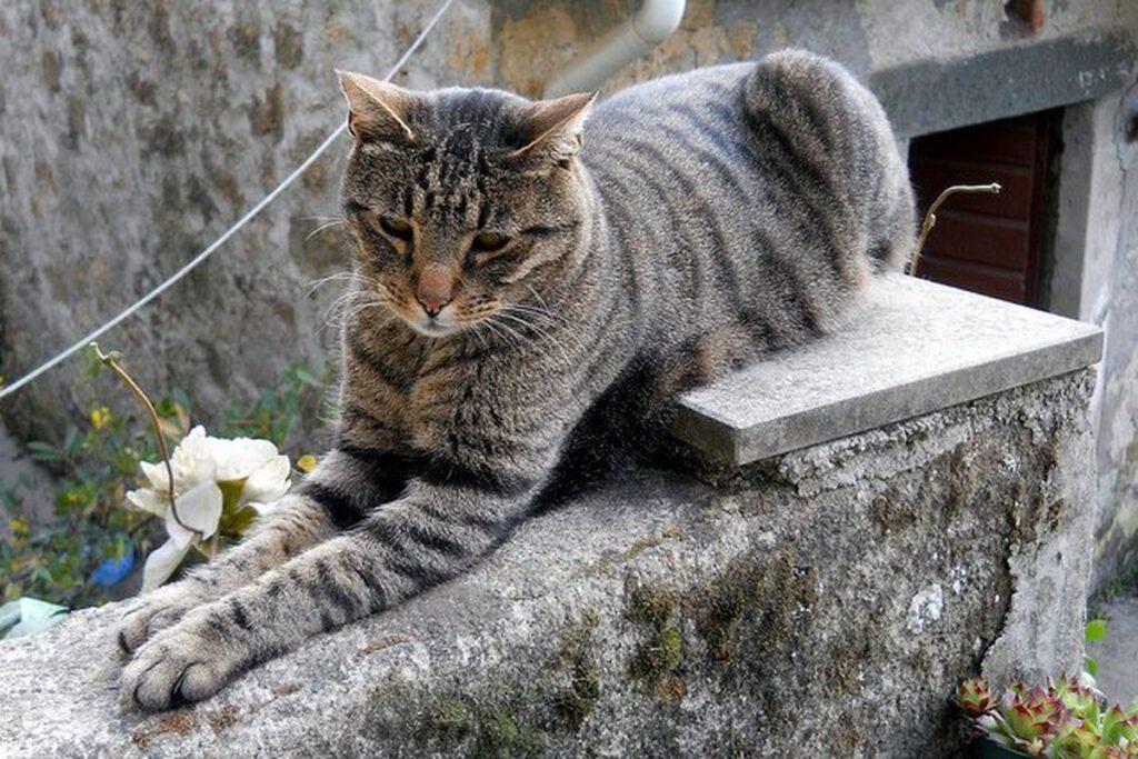 gatto tigrato su muretto