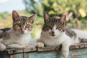 gatti che vivono all'aperto