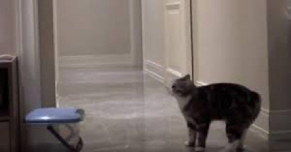 gatto in un corridoio di una casa