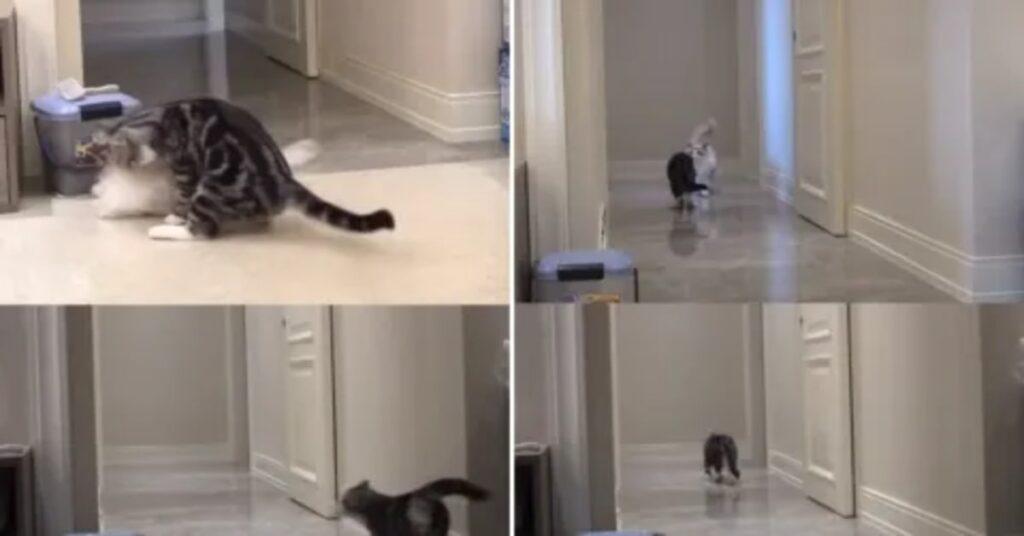 Gatto fa gli stessi movimenti di quando c'era con lui il compagno