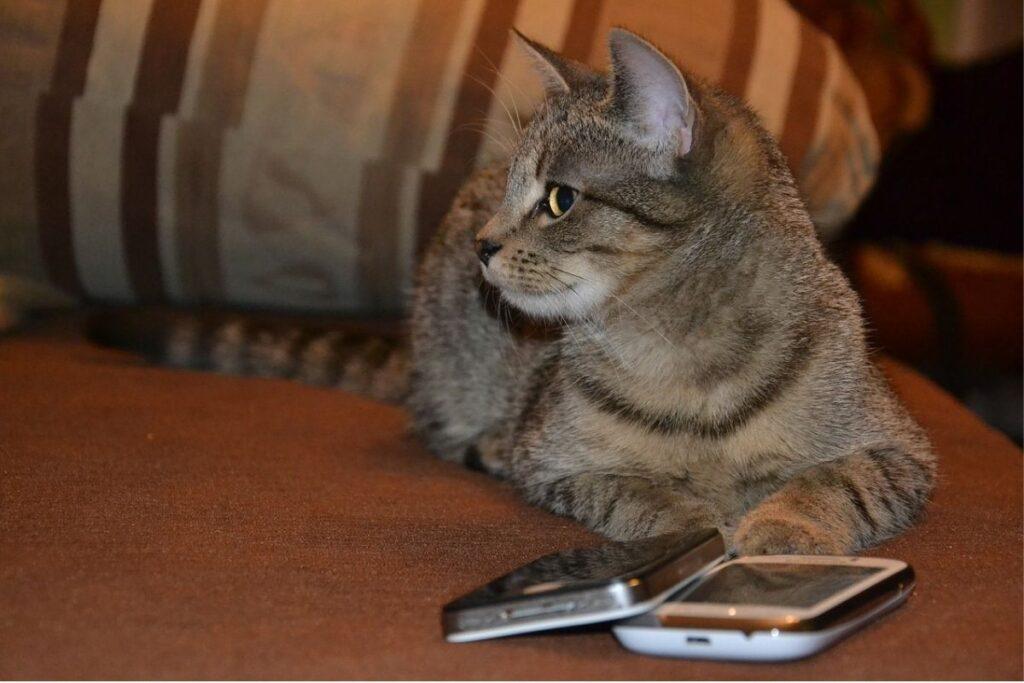 gatto guarda di lato