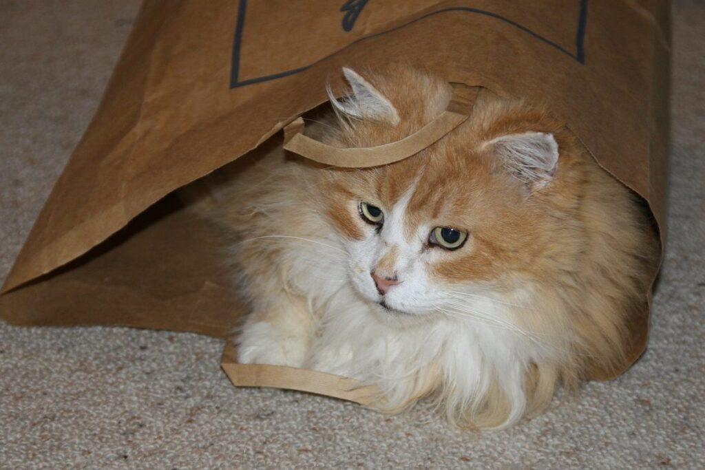 gatto bianco e arancione a pelo lungo dentro al sacchetto