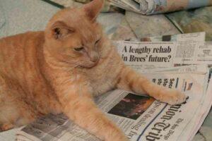 gatto arancione sul giornale