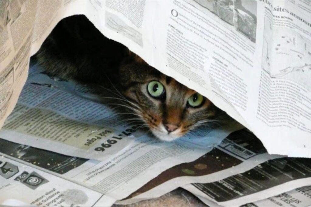 gattino gioca con i fogli di giornale
