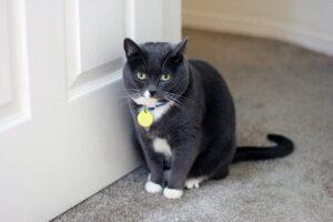 gatto e porta