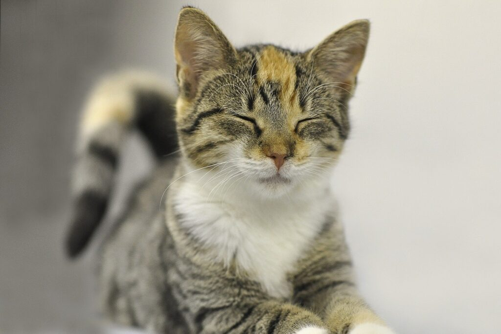 gattino con occhi chiusi