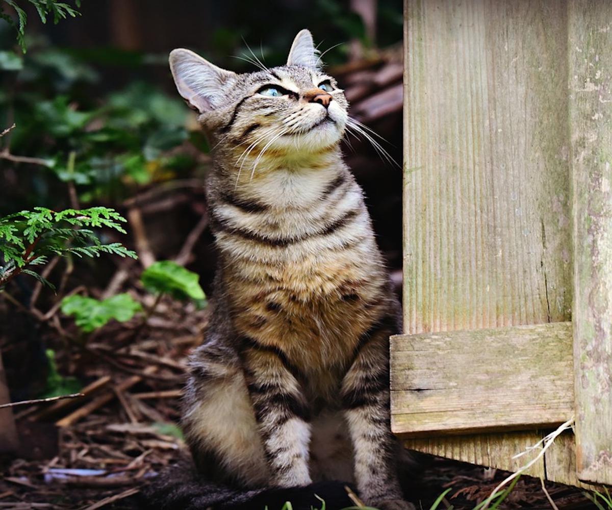 gattino attento alla preda