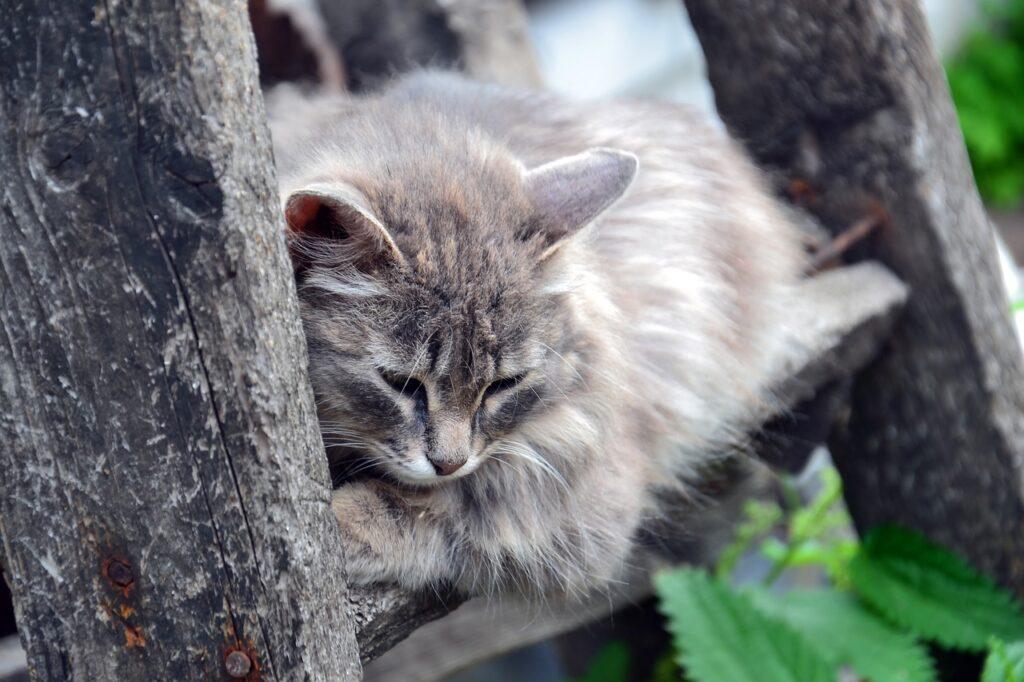 gatto pelo voluminoso