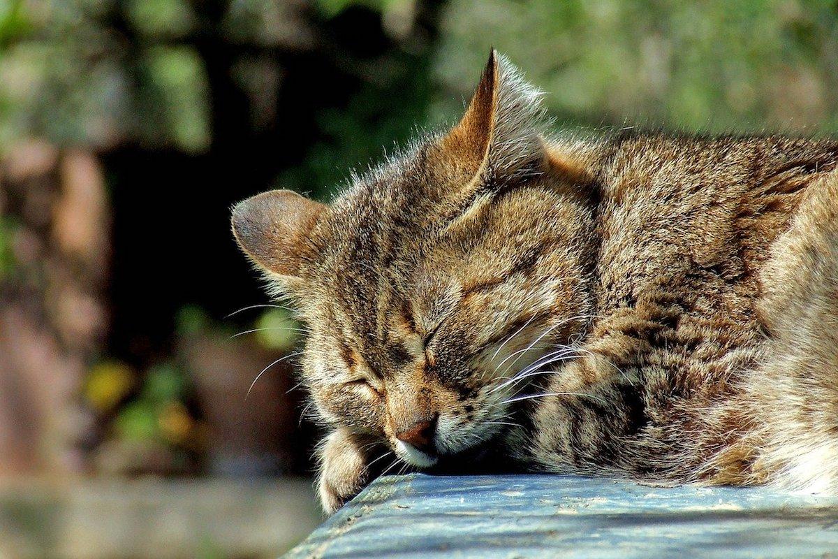 gatto dormicchia