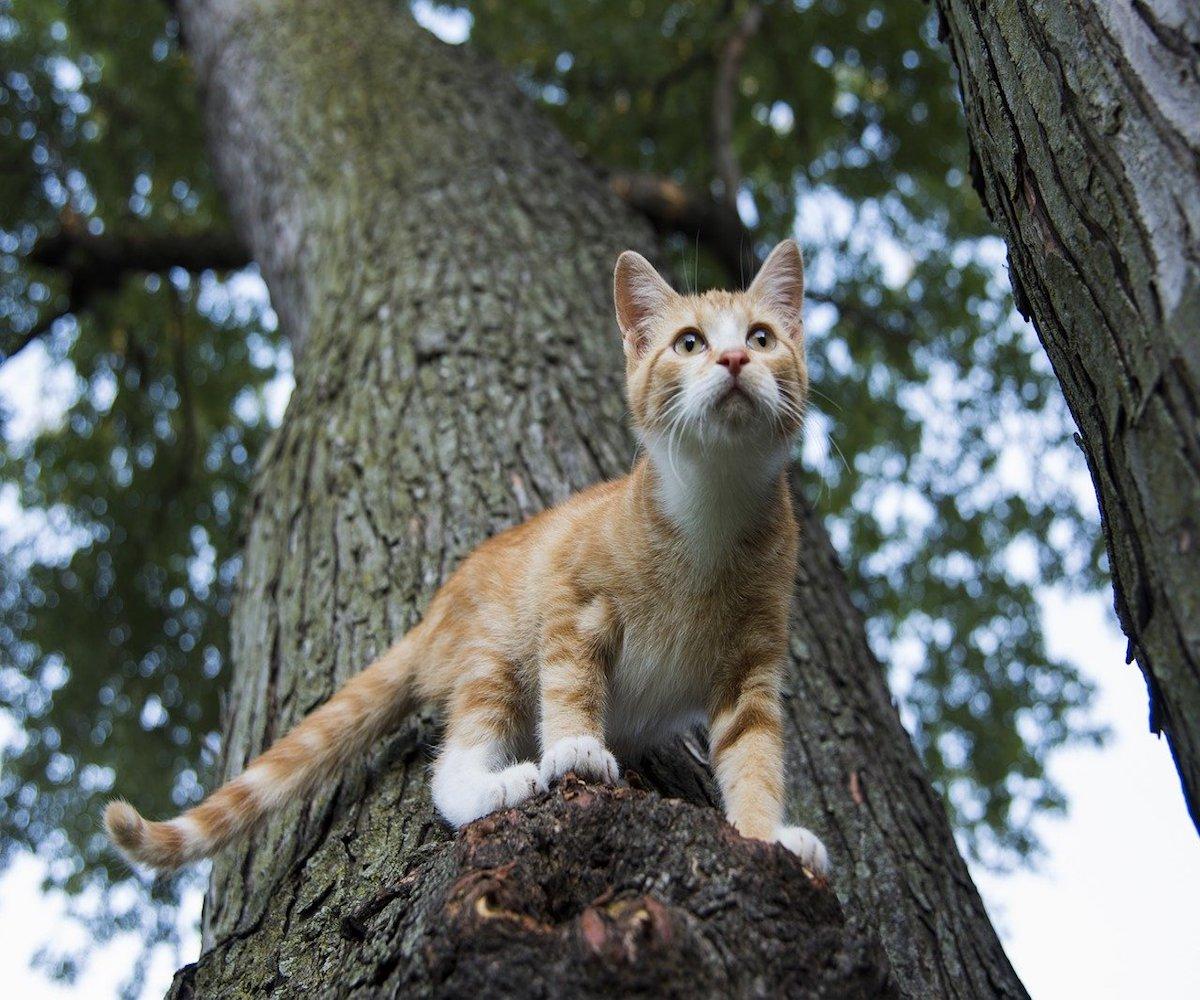 gatto arrampicato su albero
