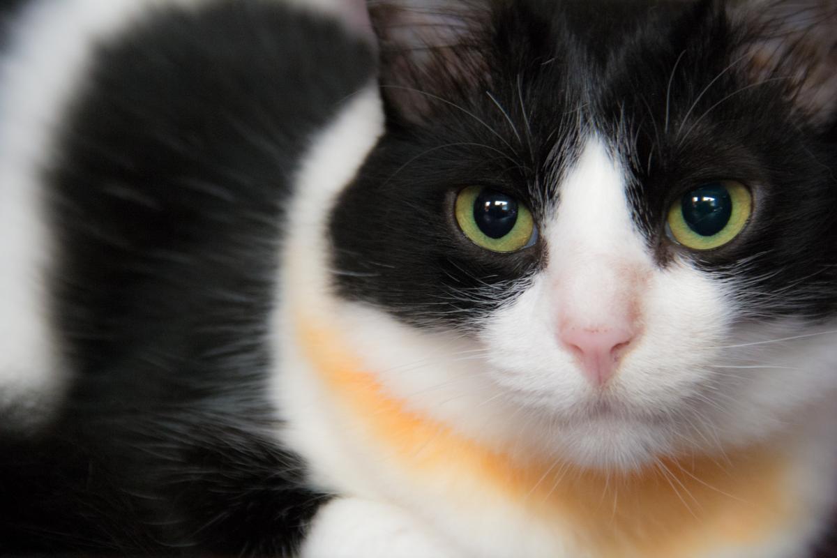 gatto con sguardo intenso